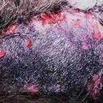 Nguyên nhân chó bị loét da, loét da có mủ và cách trị bệnh