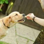 Có nên cho chó uống Canxi & Vitamin của người không?