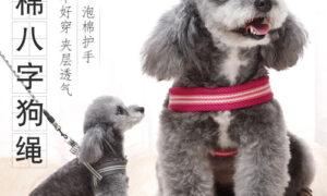 Hướng dẫn cách chọn vòng cổ tốt nhất cho chó của bạn