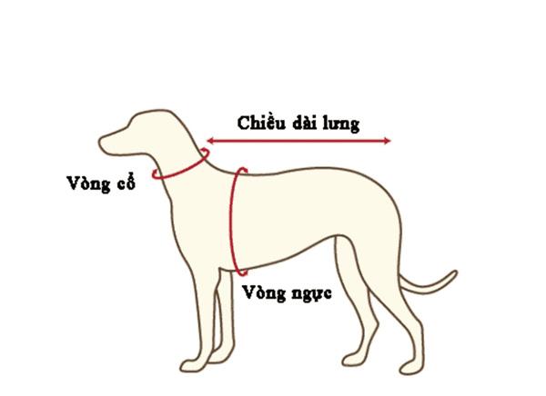 Nắm rõ số đo vòng cổ của chó giúp bạn chọn được vòng cổ dễ ràng